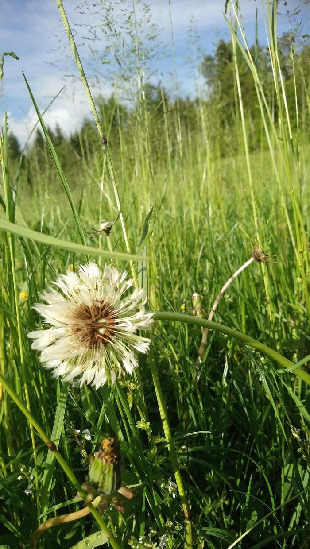 Polje in mlaka spomladi
